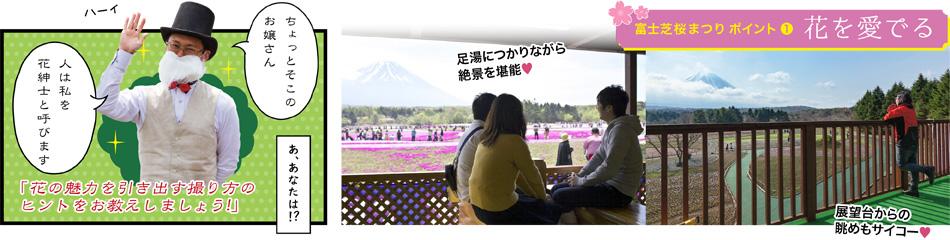 富士芝桜まつり ポイント① 花を愛でる