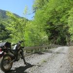 中津川林道のようす。フラットだけど石も多少あるのでトレールまたはオフロードバイク推奨