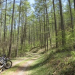 林道大門線。緑の気持ちいい林のなかでコーヒータイムを