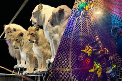 ホワイトライオンも登場する木下大サーカスの湘南鎌倉公演が12月19日よりスタート!LB読者プレゼントをGETせよ!